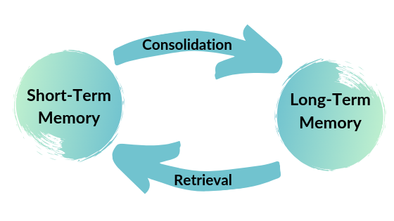 A graphic showing the process of consolidation and retrieval